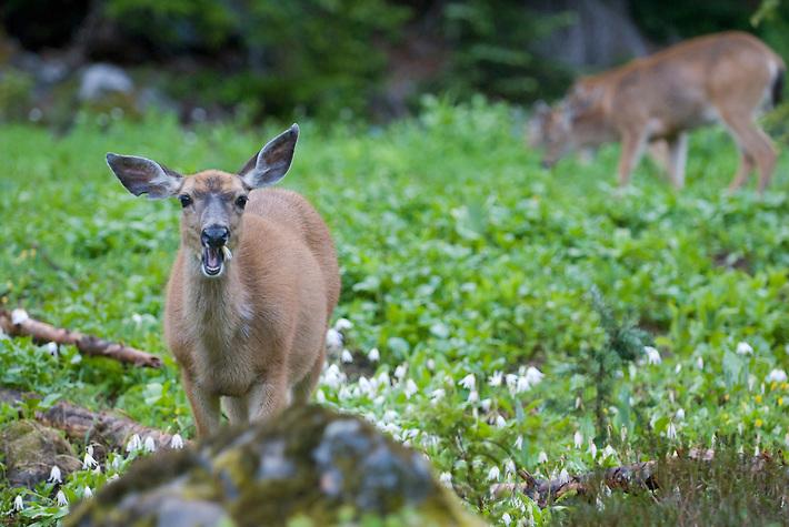 deer-lilies-2282