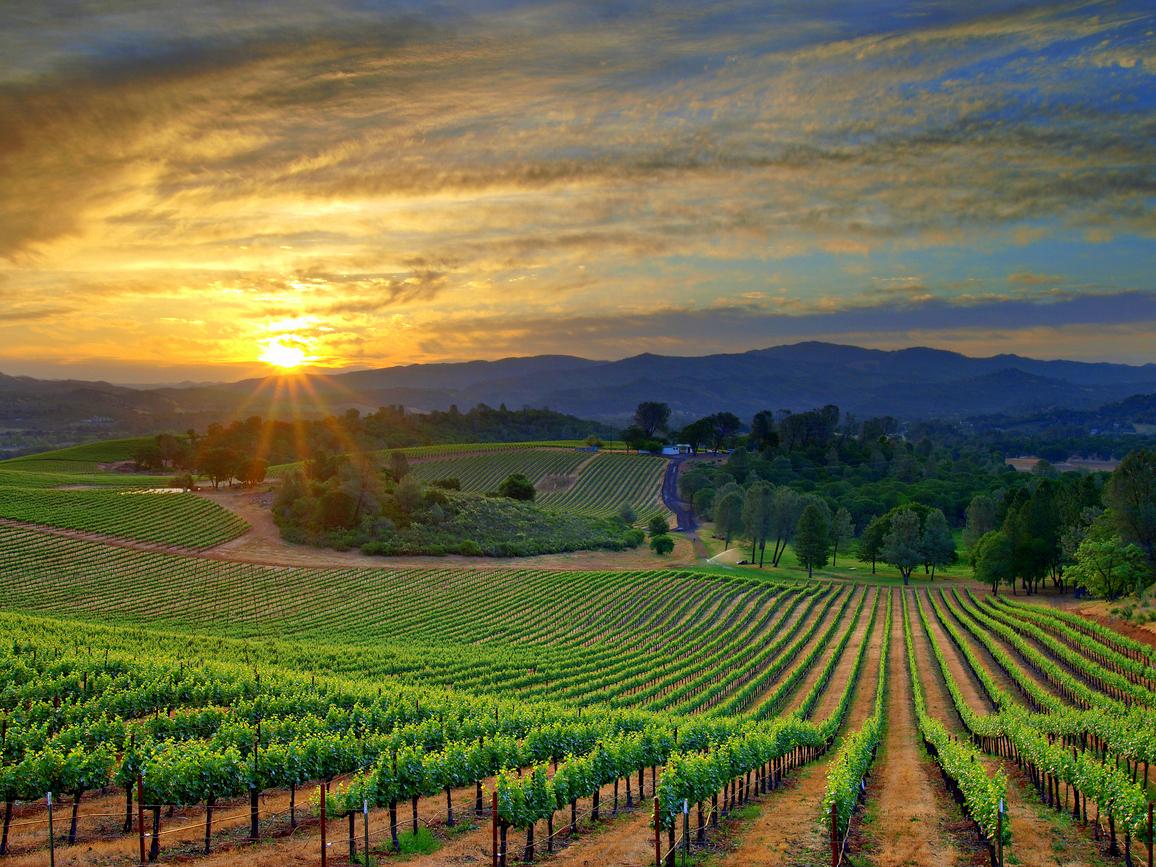 vineyardbest