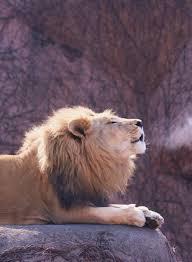 aslan-breathes